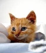 Primo soccorso gatti