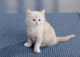 Gattino cucciolo