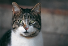 La vista del gatto