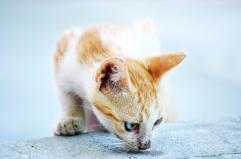 L'olfatto dei gatti