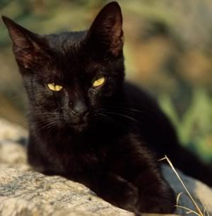 gatto_nero_articolo