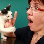 educare-il-gatto-anteprima-600x337-694852