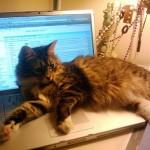gatti_laptop_01_01