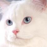 occhi_blu