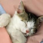 gatto-comportamento-starnuto-1024x721