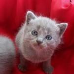 gatto-problema-lettiera_a