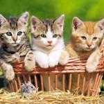 trio-gattini