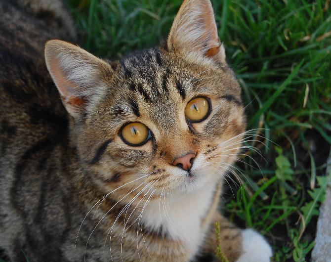 Basta un miao e per appassionati di gatti for Allontanare i gatti