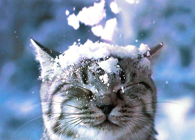 gatto-delle-nevi-usato