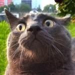 gatto-spaventato-primo-piano