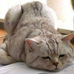 gatto-stress1