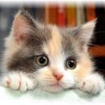 gatto-stressato1