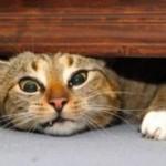 stress gatto interna