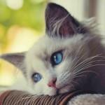 come-capire-se-il-vostro-gatto-e-depresso