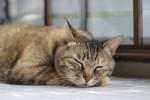 Gatto-che-dorme-620x350