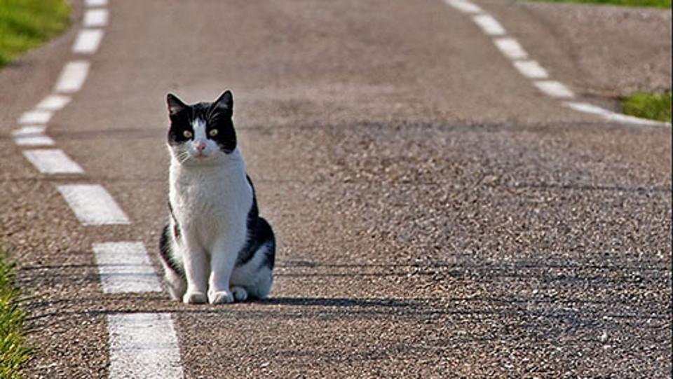 Gatto investito cosa fare e chi contattare per - Che malattie portano i gatti ...