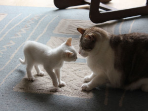 20120328-arriva-nuovo-gatto-1