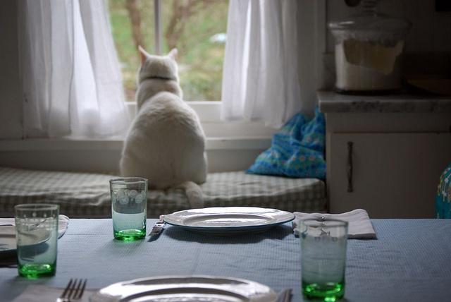 Gli spazi felini come il gatto suddivide la casa per - Gatto defeca per casa ...