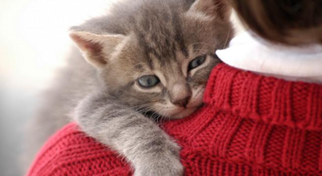 Non Lasciarmi Ansia Da Separazione Per Appassionati Di Gatti
