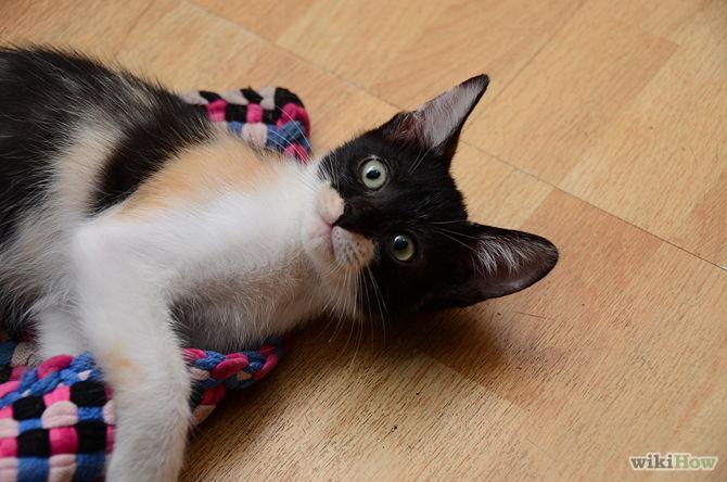 Un Gatto In Casa Di Cosa Ha Bisogno E Che Senso Hanno Per Lui Le Cose Per Appassionati Di Gatti