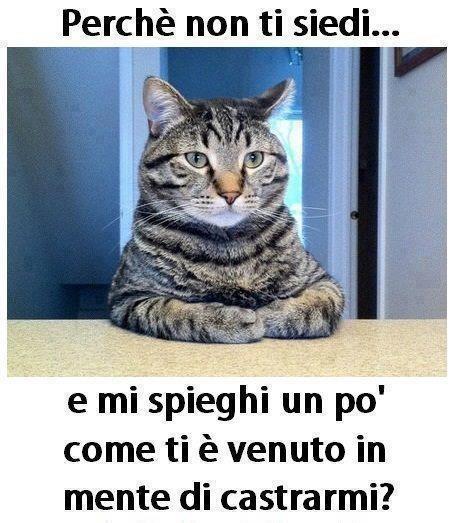 542-gatto-seduto-scrivania-chiede-perch-deve-essere-castrato