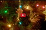 2015-12-24-14_54_58-Il-gatto-è-un-angelo-_-Per-appassionati-di-gatti