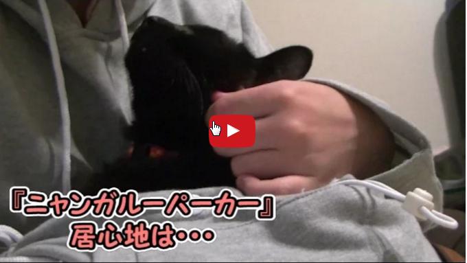 una felpa con marsupio porta gatto per appassionati di gatti