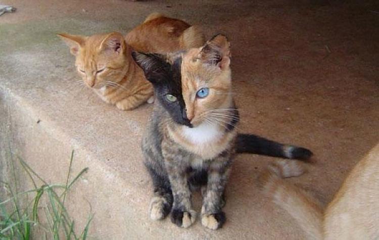 Il tuo gatto ha un sacco di segreti ecco come scoprirli - Immagine del gatto a colori ...