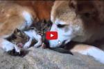 2016-02-25 09_45_25-Gattini accuditi da una coppia di cani - Per appassionati di gatti
