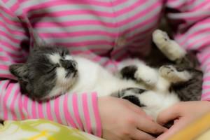 amare-gatti