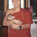 gatto-monaco