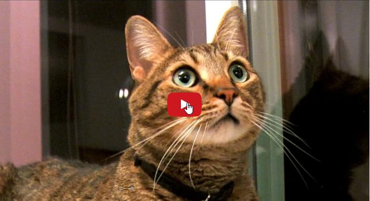 Quando un gatto cambia casa per appassionati di gatti - Gatto defeca per casa ...