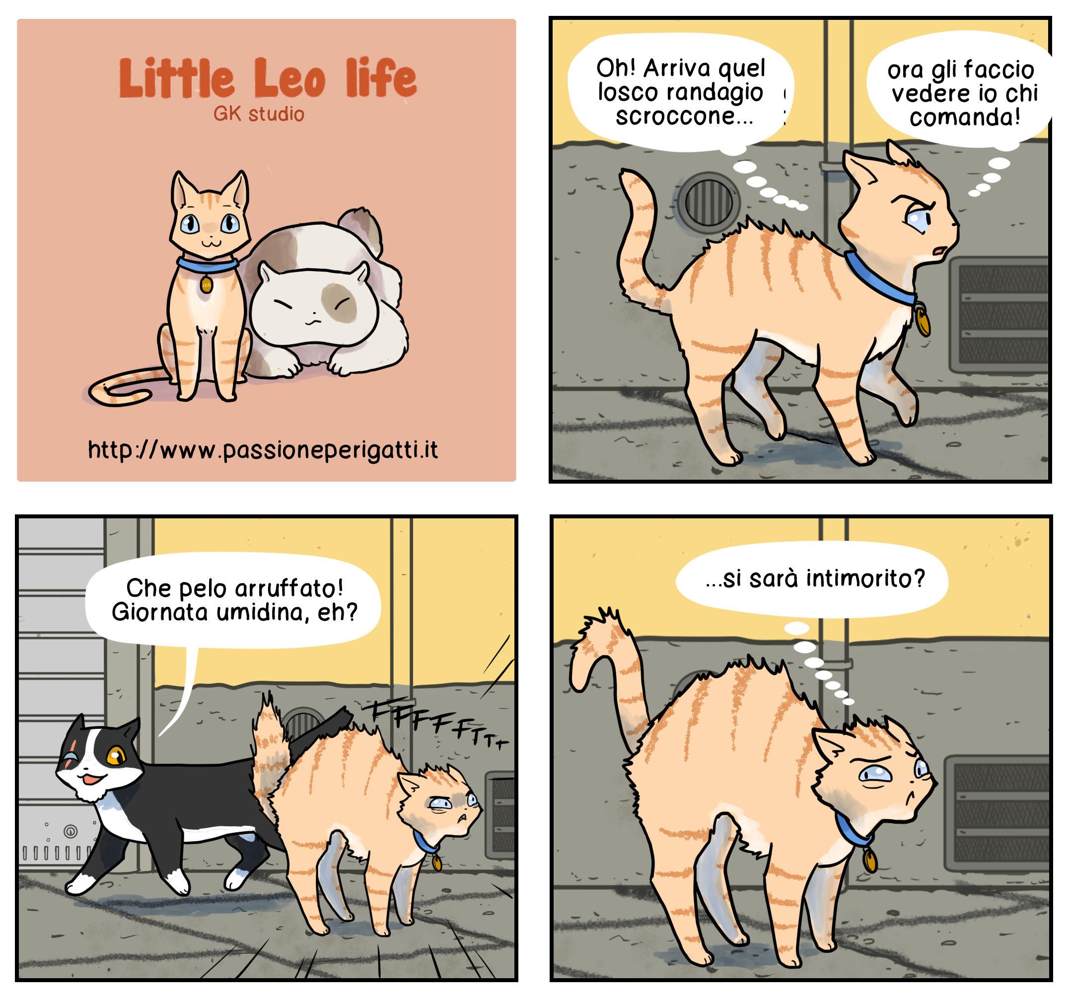 gatti 15 new