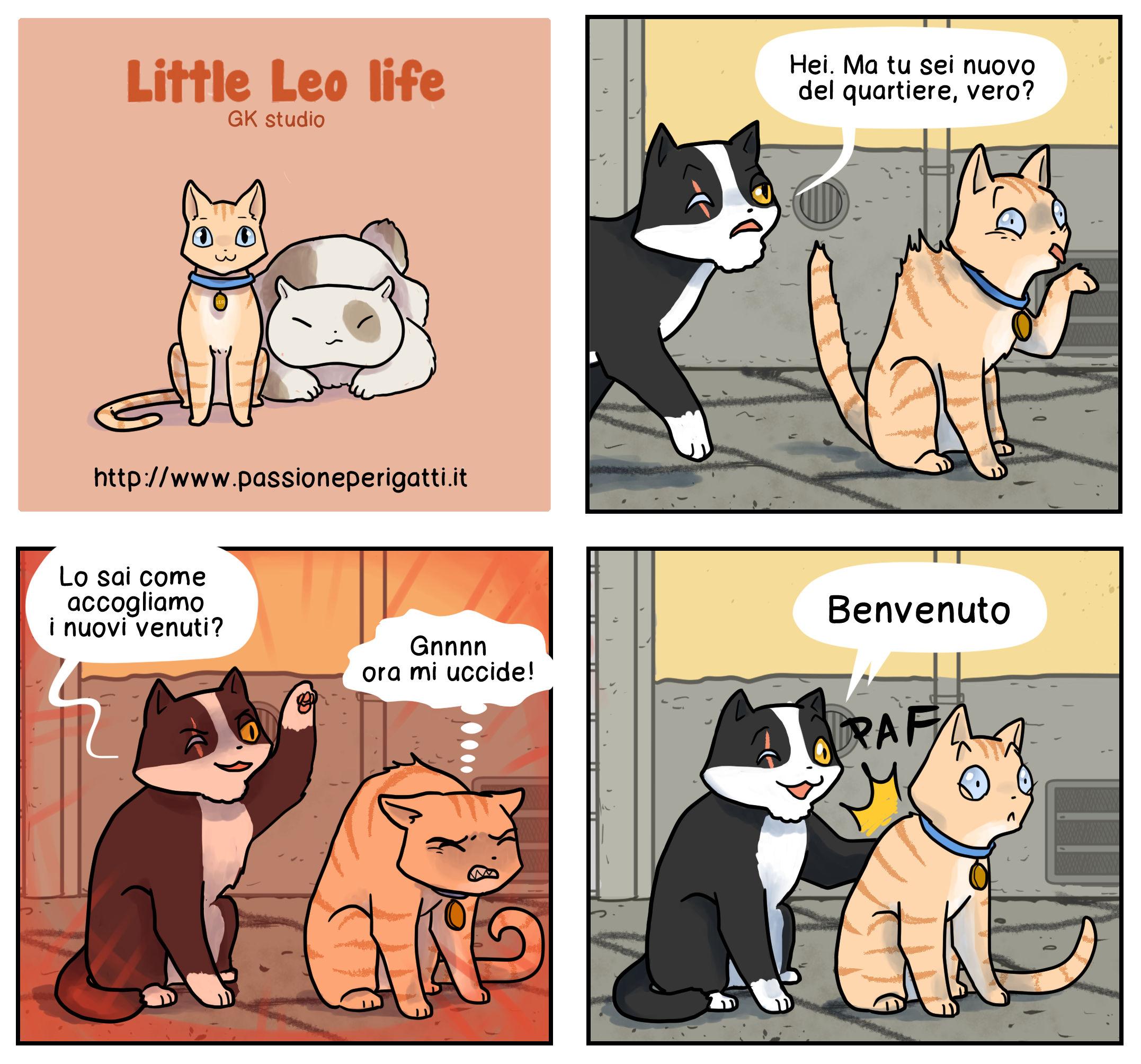 gatti 16 new