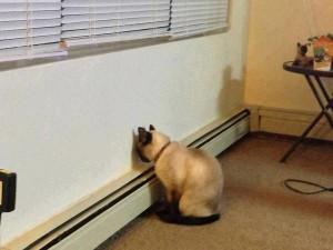 gatto-offeso