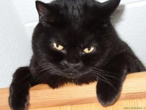 gattoarrabbiato