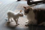 20120328-arriva-nuovo-gatto-1 (1)