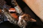Come-fare-massaggio-rilassante-al-gatto