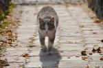 gatto-randagio-adottato