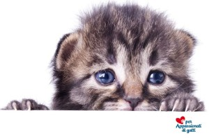 paure-del-gatto