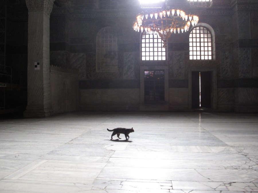 cat-in-mosque-900x675