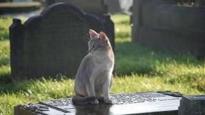 gato-tumba_CLAIMA20150321_2060_27