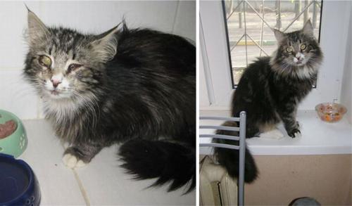 gatos-adocao-transformacao-08-500x293