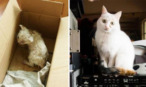 gatos-adocao-transformacao-09-500x296
