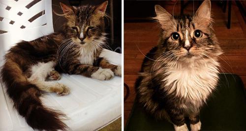 gatos-adocao-transformacao-12-500x266