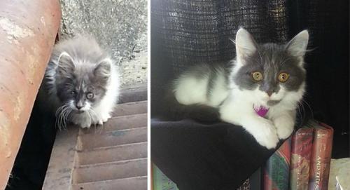 gatos-adocao-transformacao-13-500x271