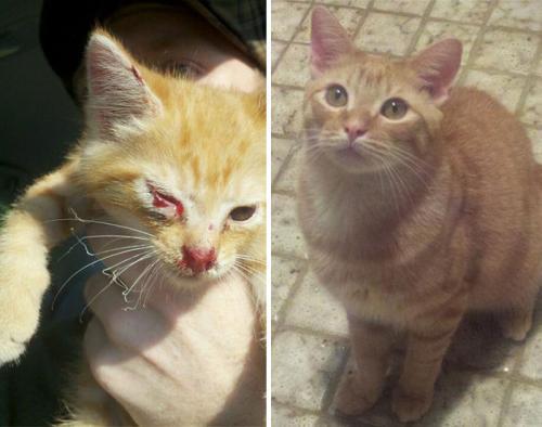 gatos-adocao-transformacao-15-500x394