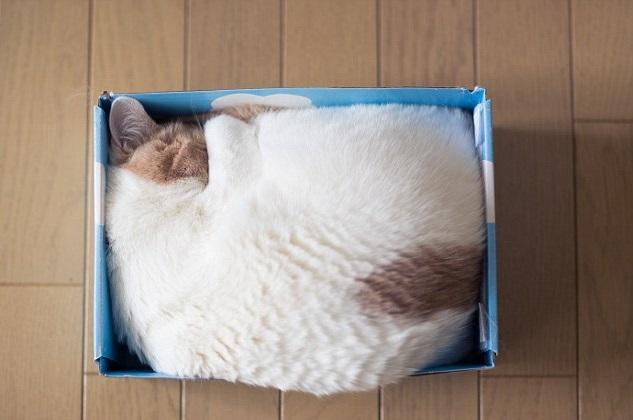 gatti-scatole-2