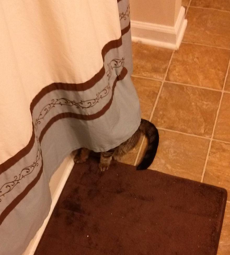 ninja-cat-hiding-funny-27__880