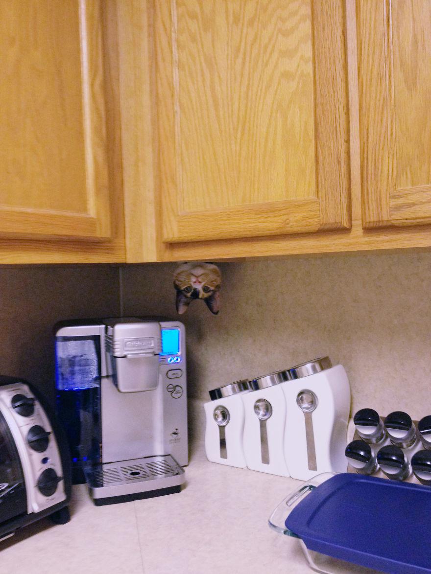 ninja-cat-hiding-funny-9__880